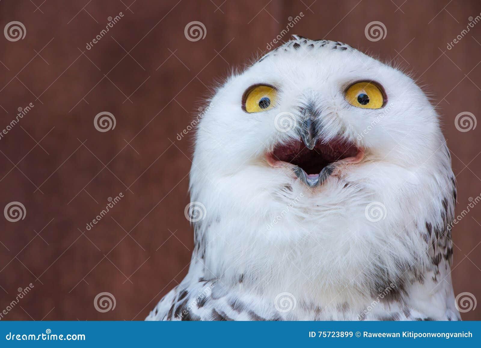 White Owl with shocking meme face