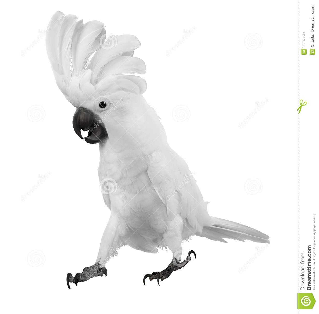 White Parrot Royalty Free Stock Photography - Image: 23675547