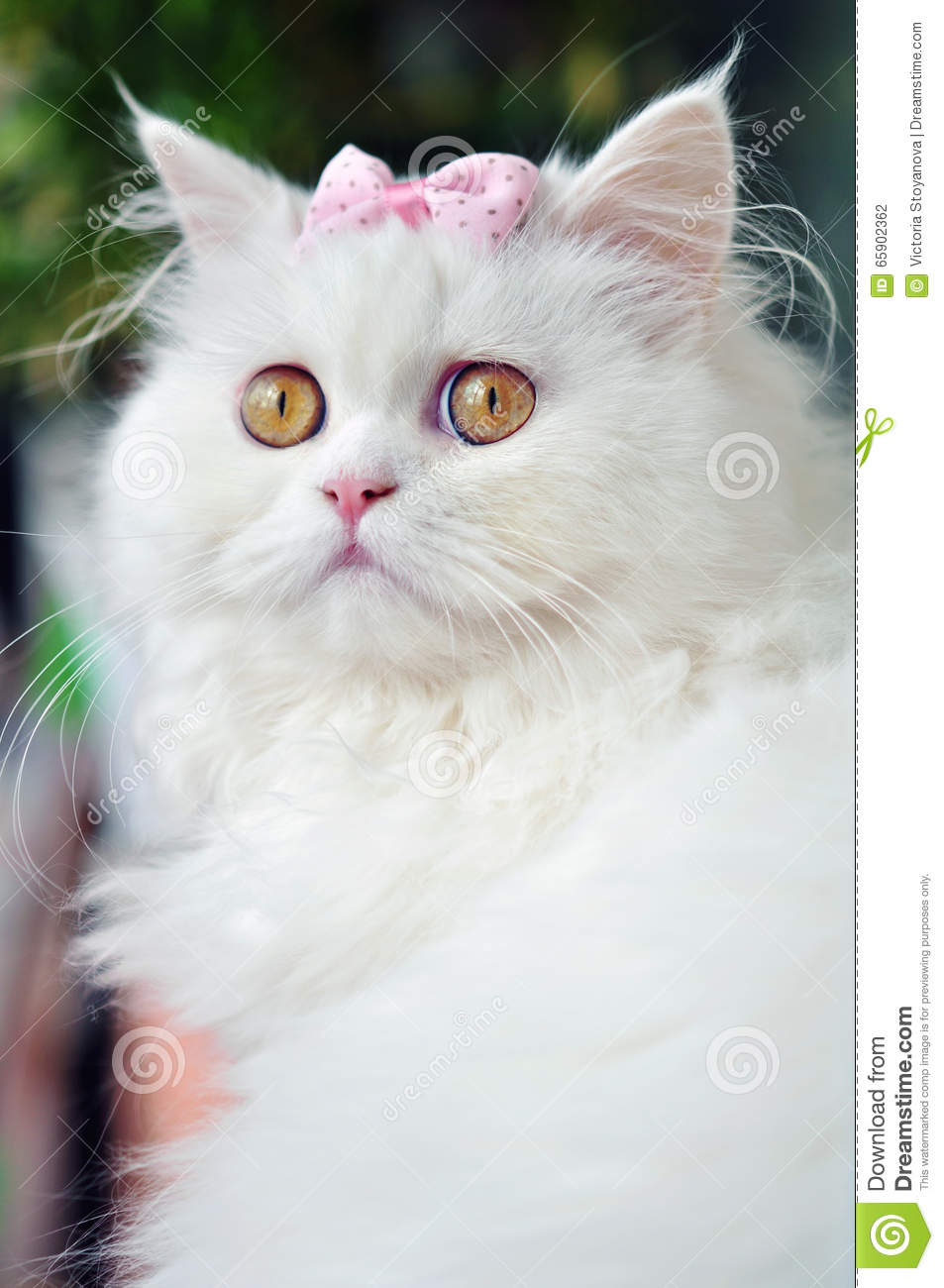Beautiful White Cat With Bow