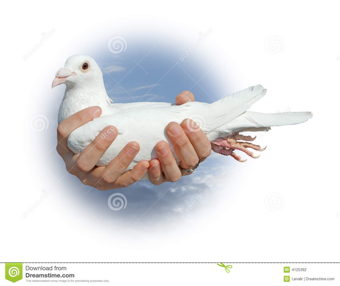 white pigeon girls White pigeon is a village in st joseph county in the us state of michigan the  population was  255% were from 45 to 64 and 152% were 65 years of age or  older the gender makeup of the village was 470% male and 530% female.