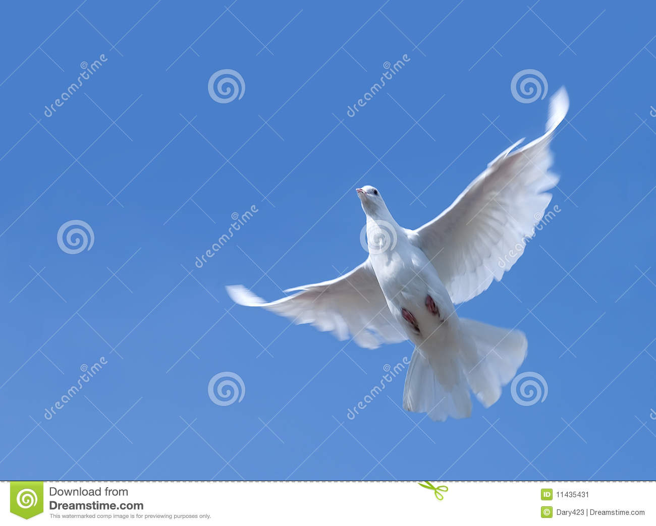 White pigeon flying in the sky