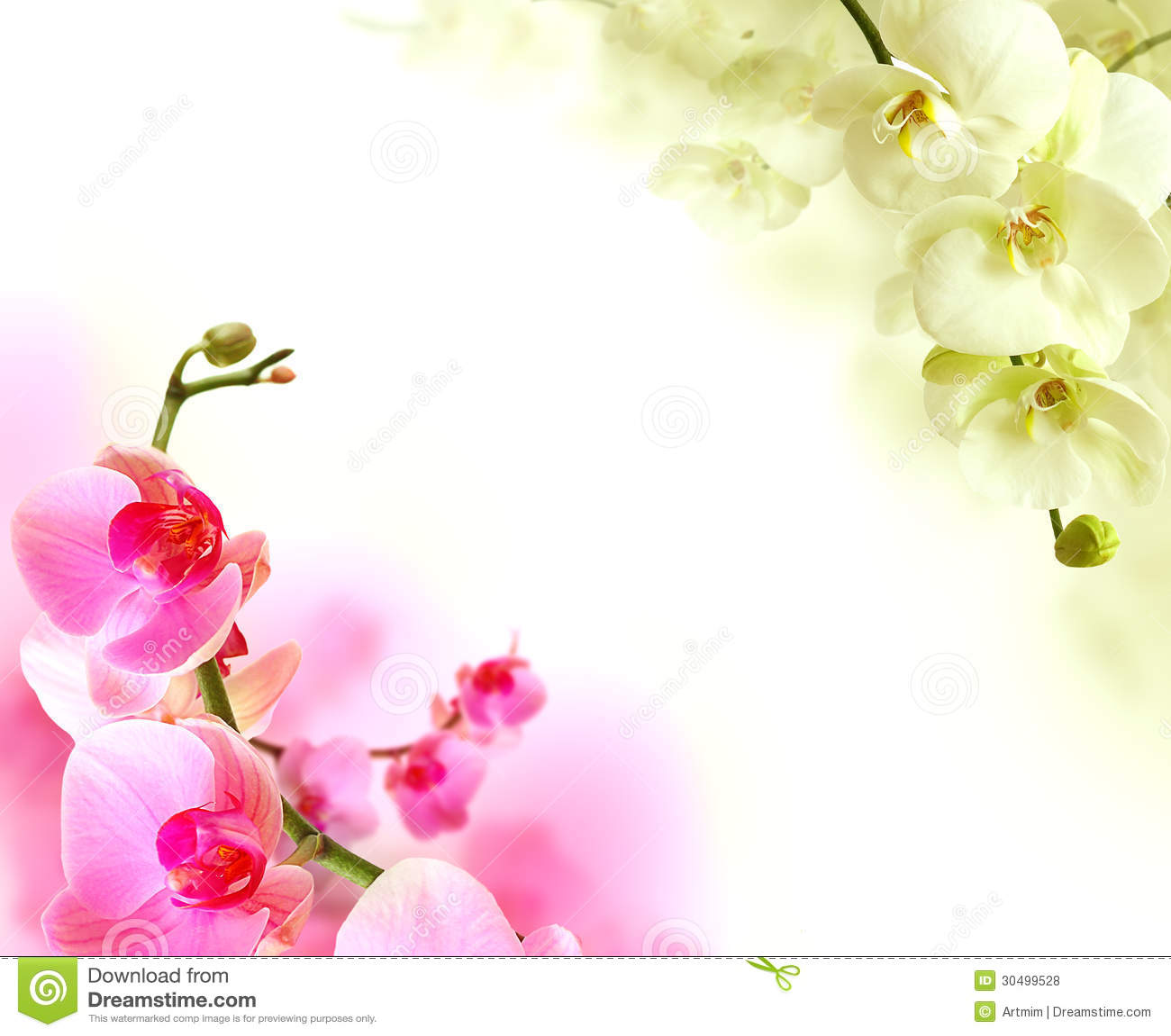 Flower Images Stock Photos amp Vectors  Shutterstock