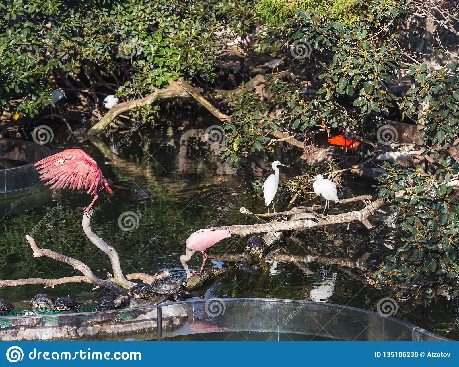 White and pink herons and turtles in the city park in Valencia, Spain