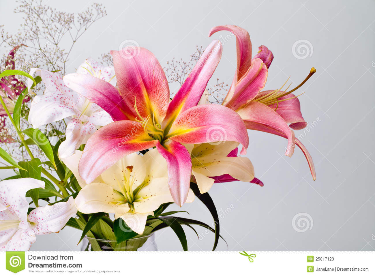 White and pink lily flowers stock image image of background white and pink lily flowers izmirmasajfo