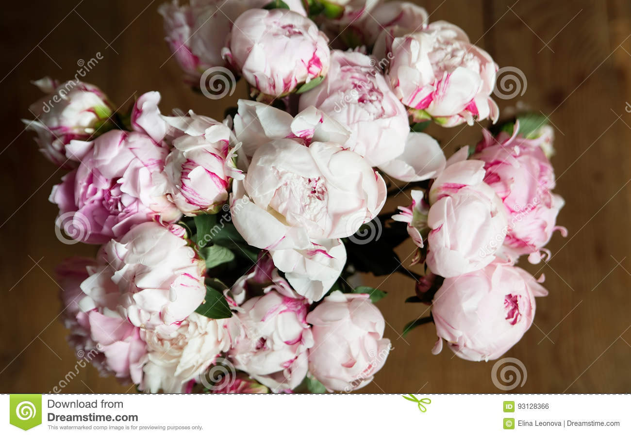 white and pink peonies. background, wallpaper stock photo - image of