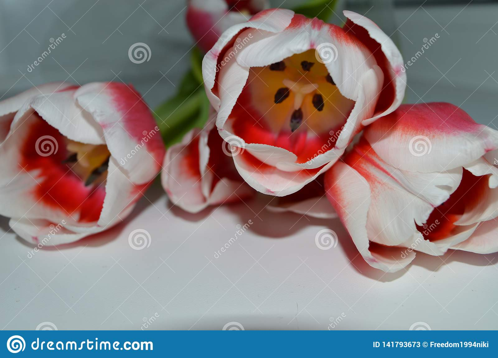 White-pink tulips on a white table