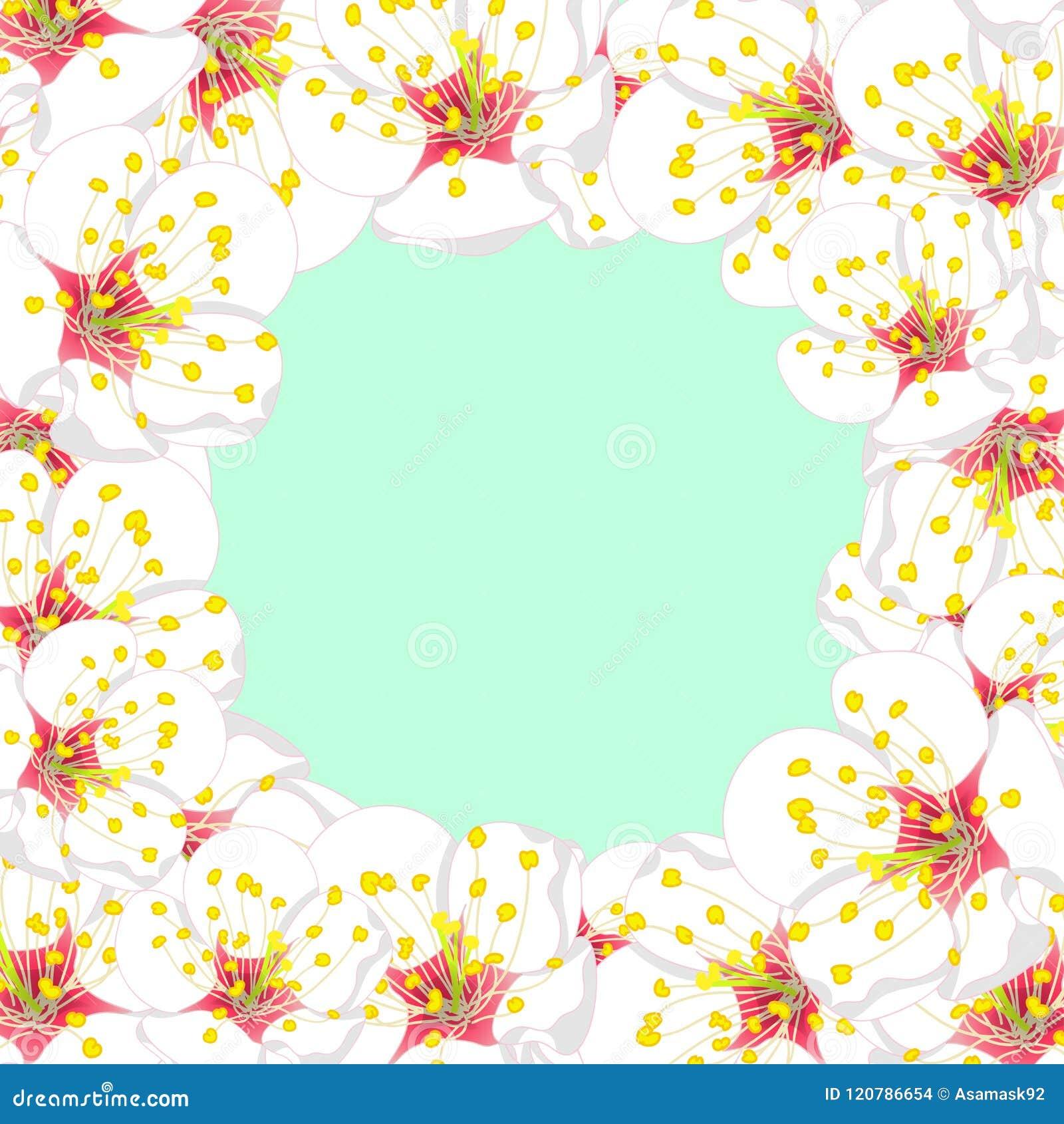 White Plum Blossom Flower Border isolated on Green Mint Background. Vector Illustration