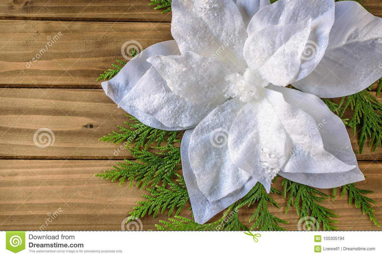 White Poinsettia With Christmas Tree Branch On Wooden