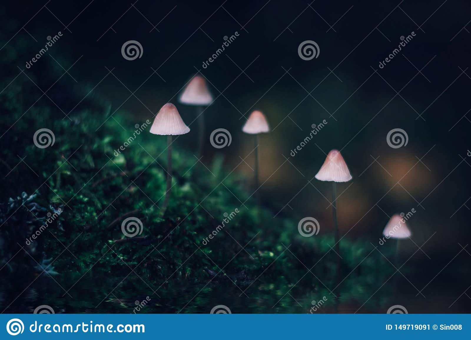 White poisonous little mushroom mycena on dark green background. A group of mushrooms on a hill covered with moss. Mycena filopes