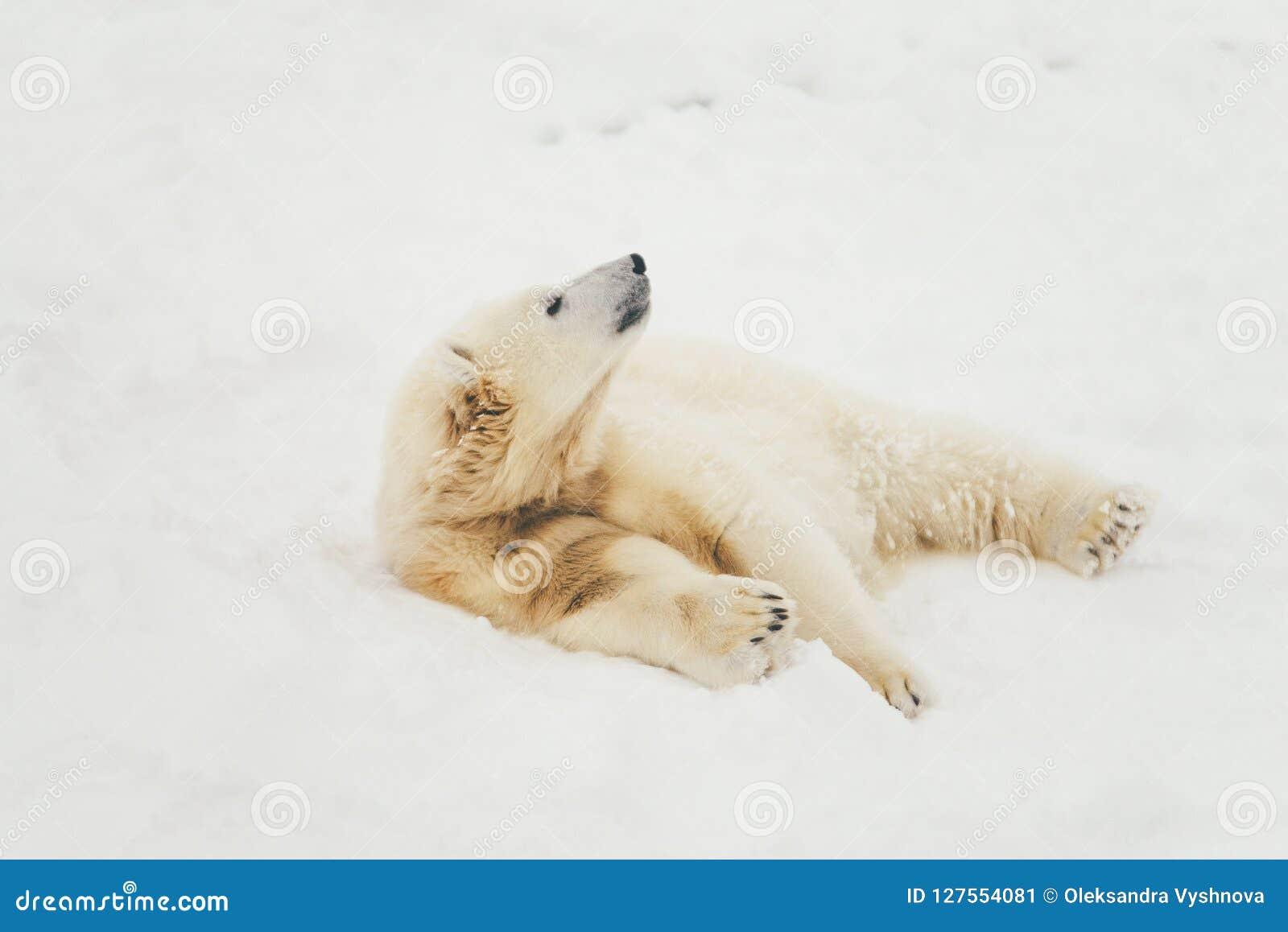 White polar bear in snow forest