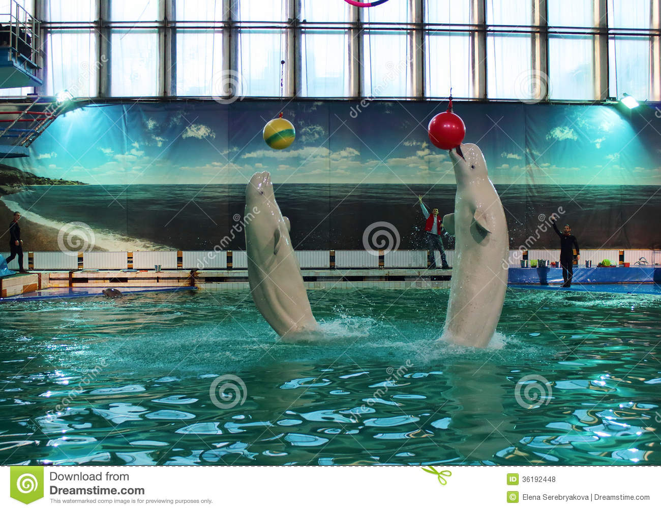 Dolphinarium in St. Petersburg: the sights of the northern capital 86