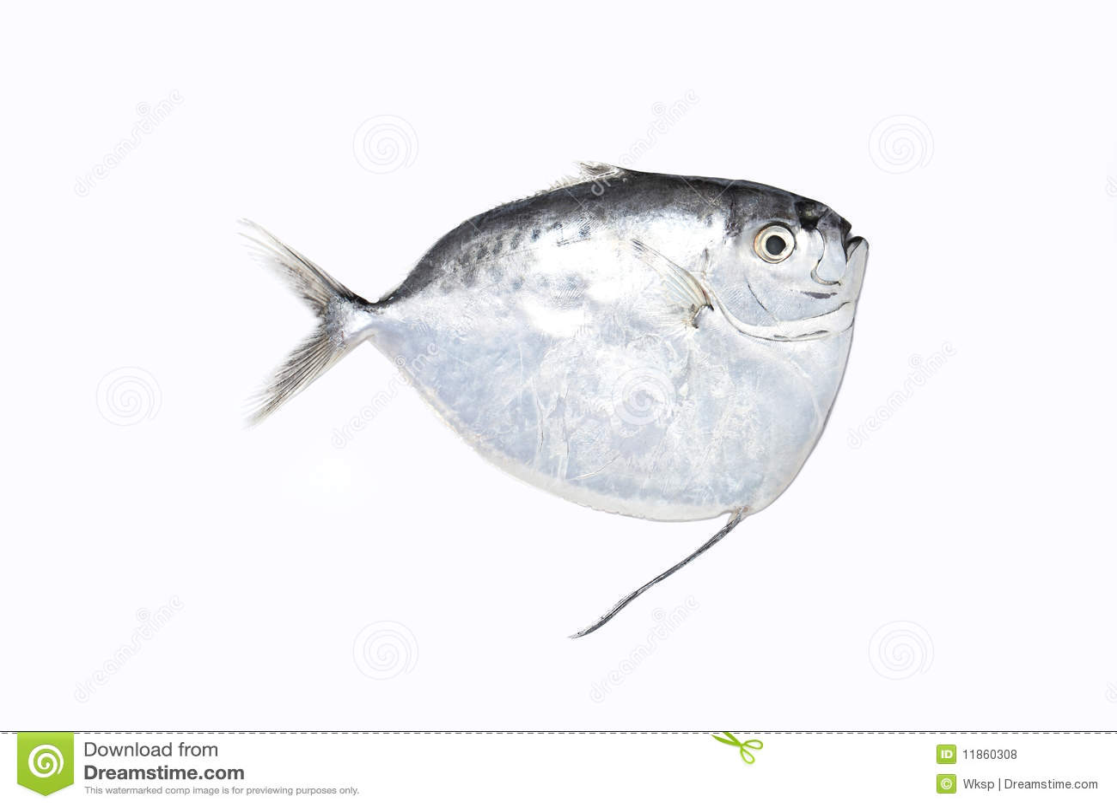 White Pomfret Fish Royalty Free Stock Photos - Image: 11860308