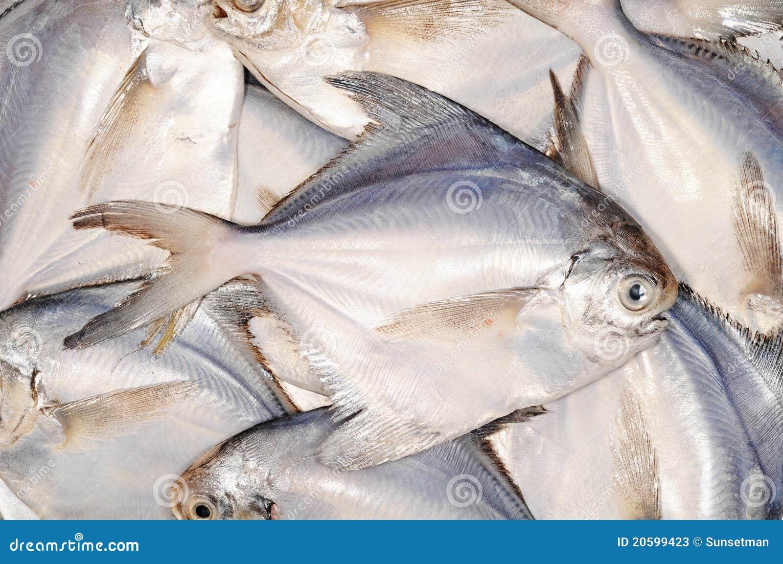White Pomfret Fishes Stock Photos - Image: 20599423