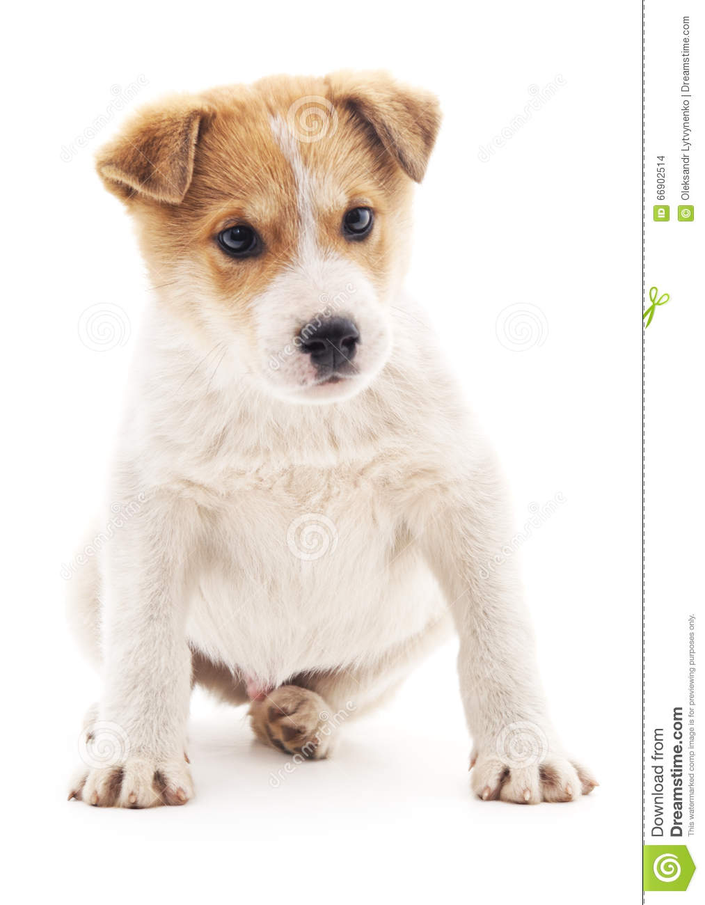 Small Brown And White Dog With Spots
