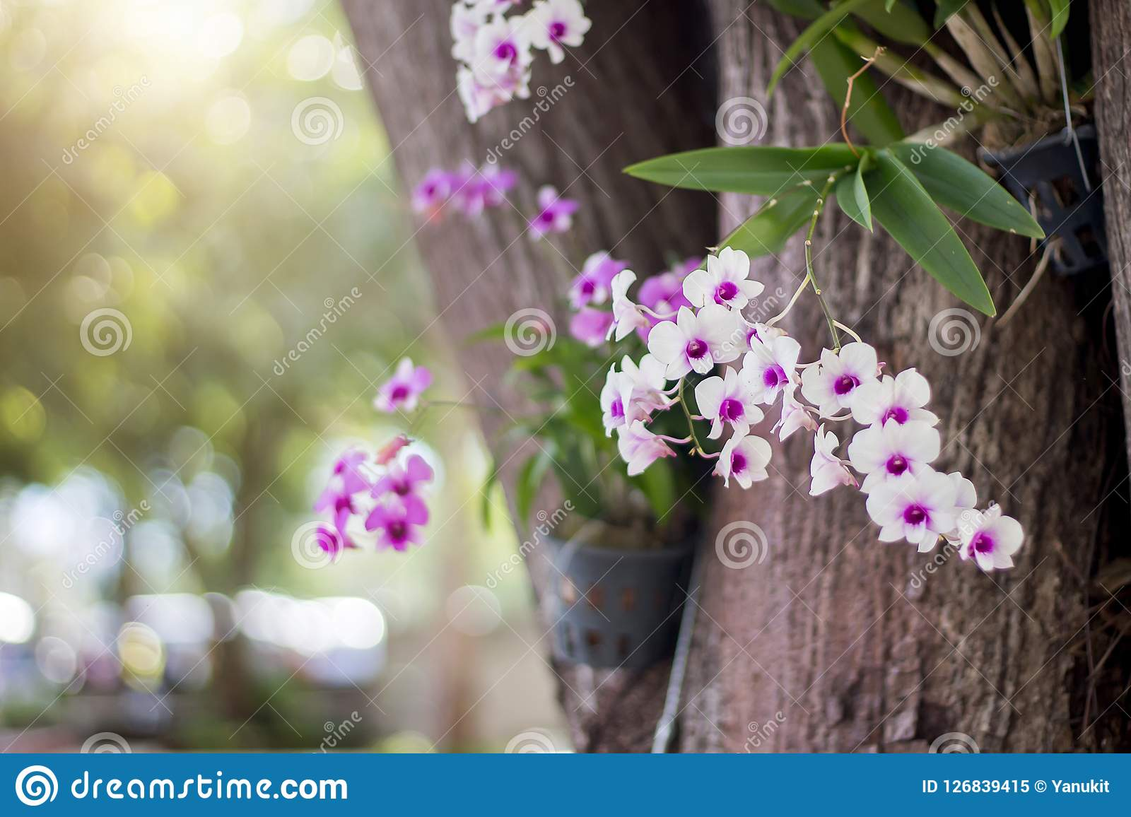 White And Purple Flower On Tree Stock Image Image Of Floral Print
