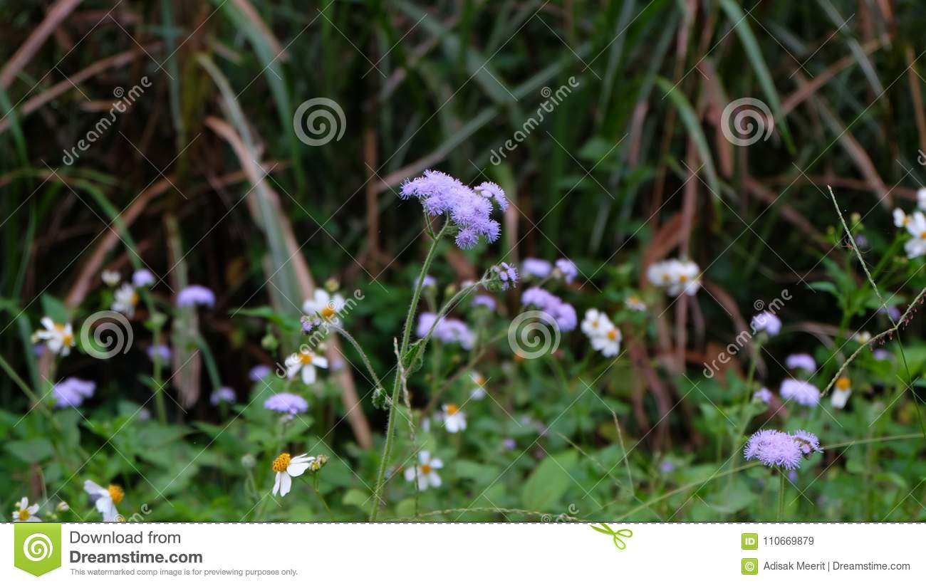 White and purple flowers with green leaves stock image image of download white and purple flowers with green leaves stock image image of white grass mightylinksfo