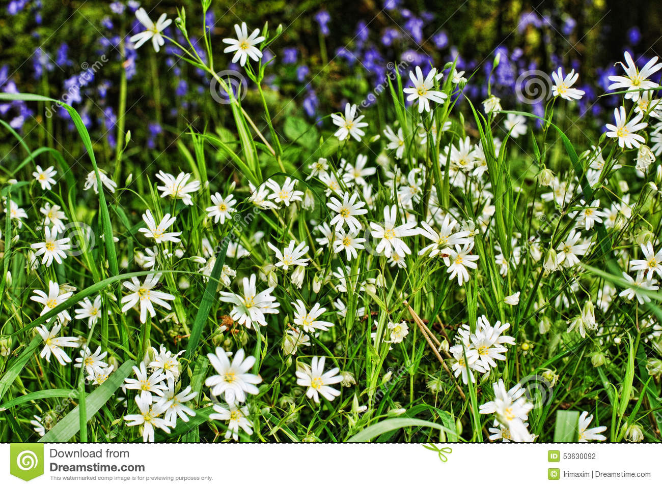 White and purple flowers stock photo image of trees 53630092 white and purple flowers mightylinksfo
