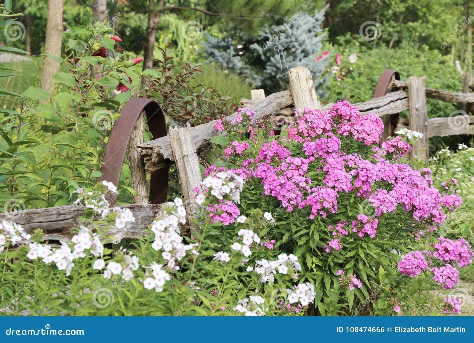 377 Garden Wagon Wheels Photos Free Royalty Free Stock Photos From Dreamstime