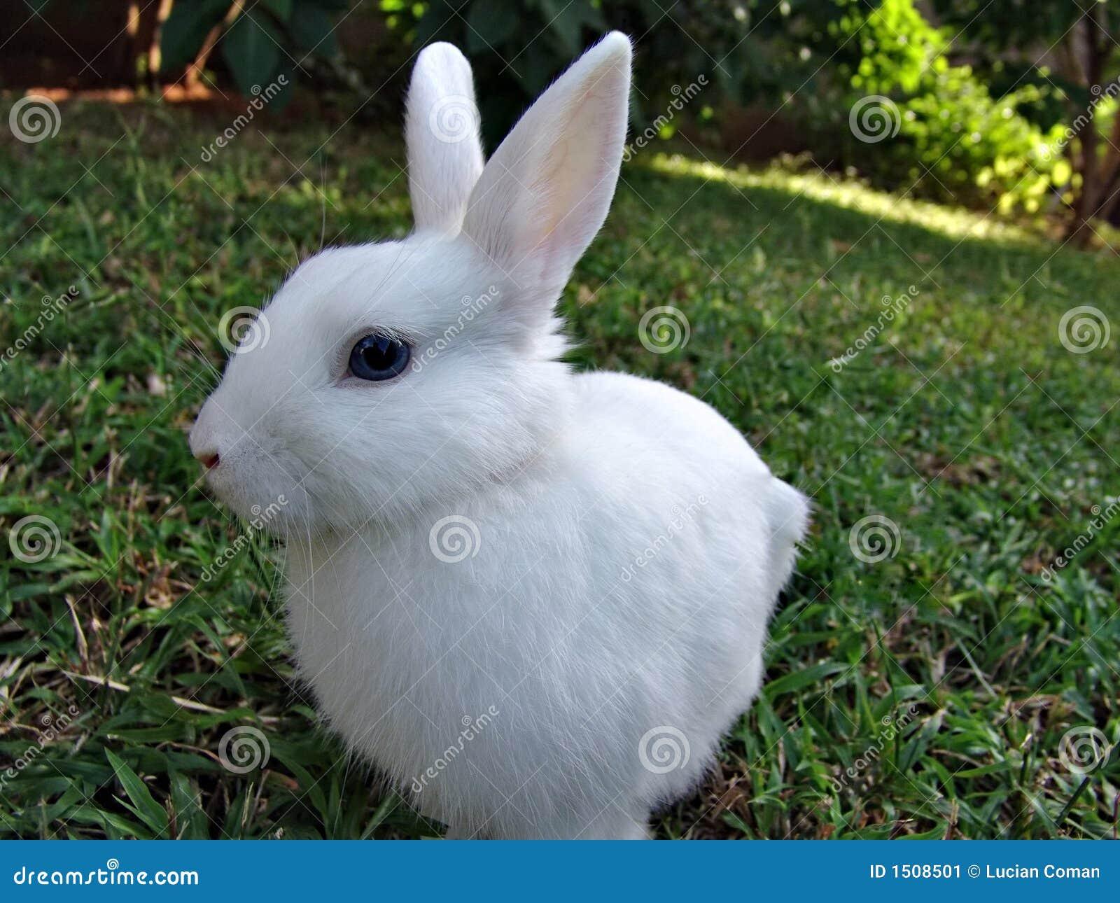 White rabbit stock image. Image of happy, greeting, decor ...