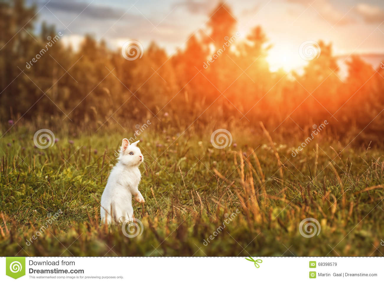 White Rabbit Or Bunny On Green Meadow In Nature Happy Easter Symbol