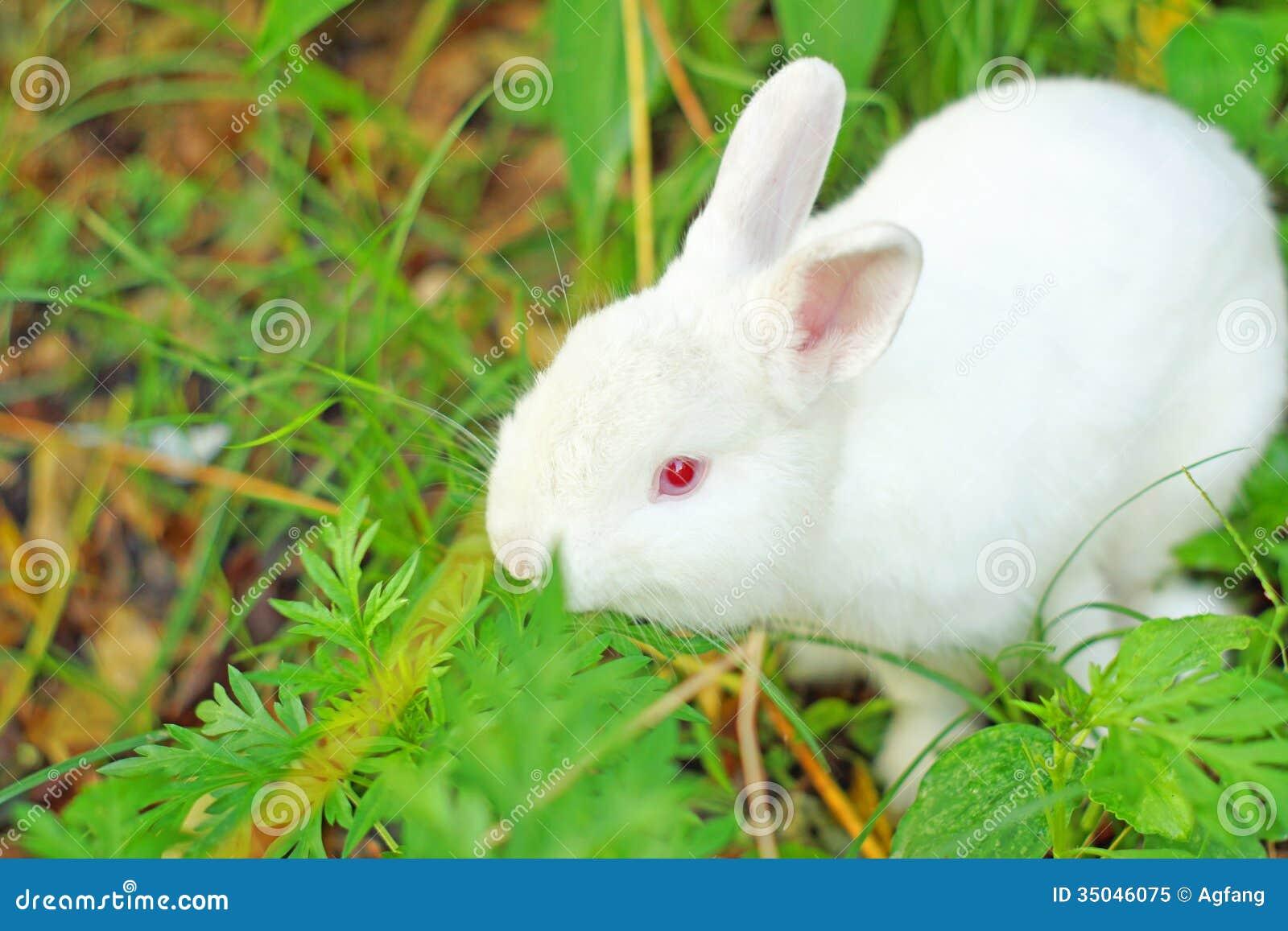 Cute white rabbit images cute white rabbit images photo19 voltagebd Choice Image