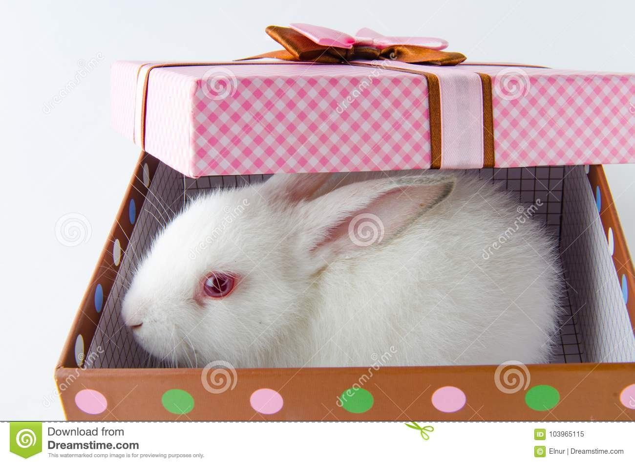 The white rabbit in gift box in easter concept stock image image download comp negle Gallery