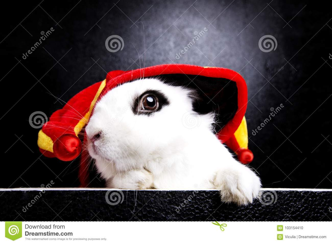 White rabbit with a joker cap on a black background