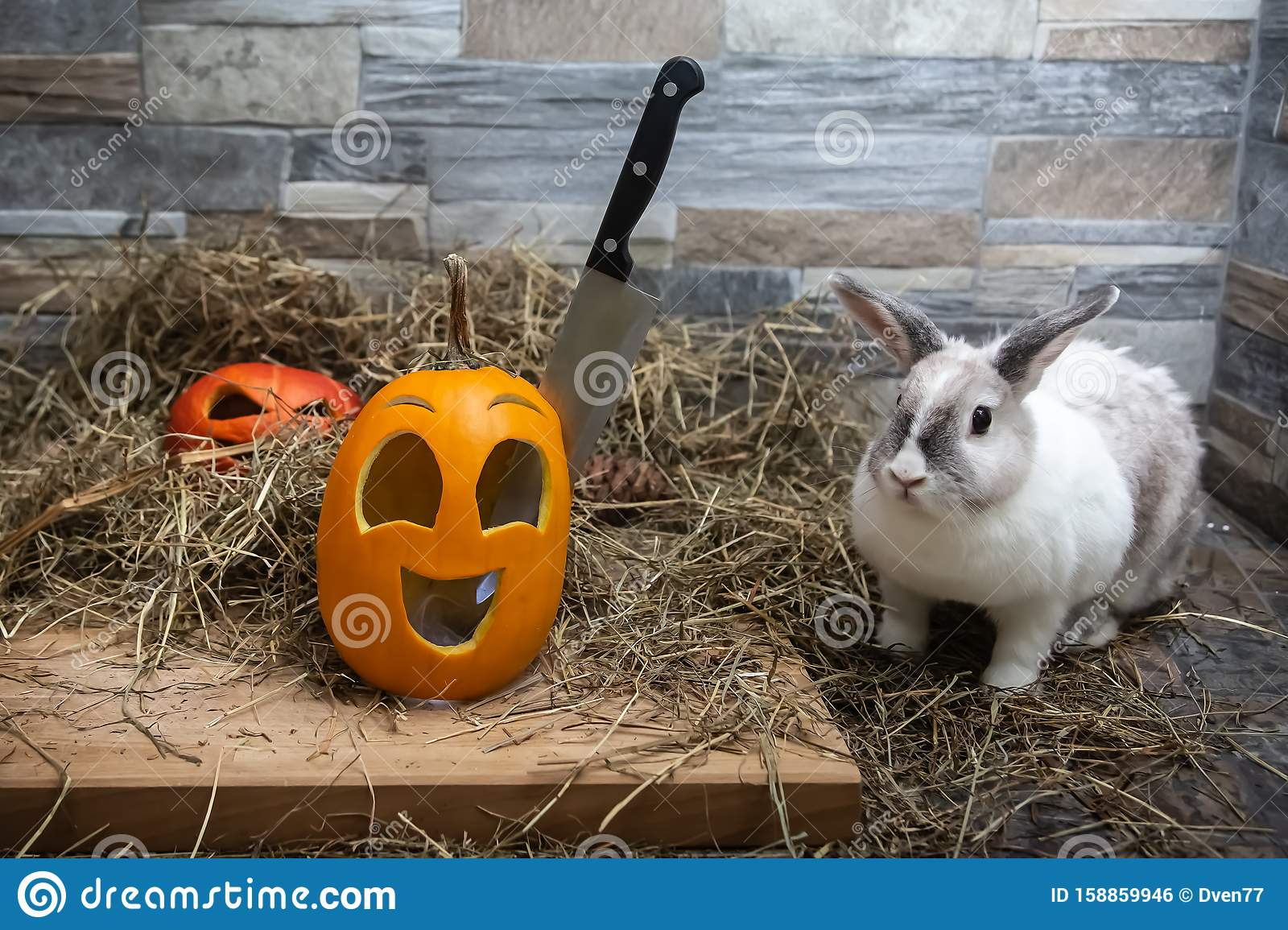 White Rabbit Looks At A Knife That Is Stuck In The Head Of ...