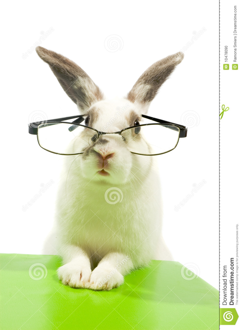 white rabbit wearing glasses stock photo