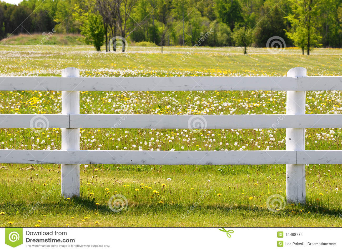 Picture of: White Rail Fence Stock Photo Image Of Wood White Post 14498774