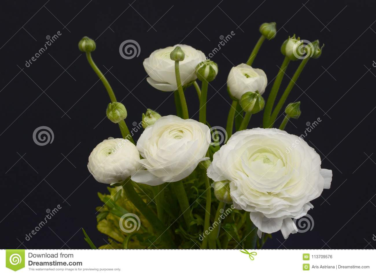 White Ranunculus Flower For Background Stock Photo Image Of