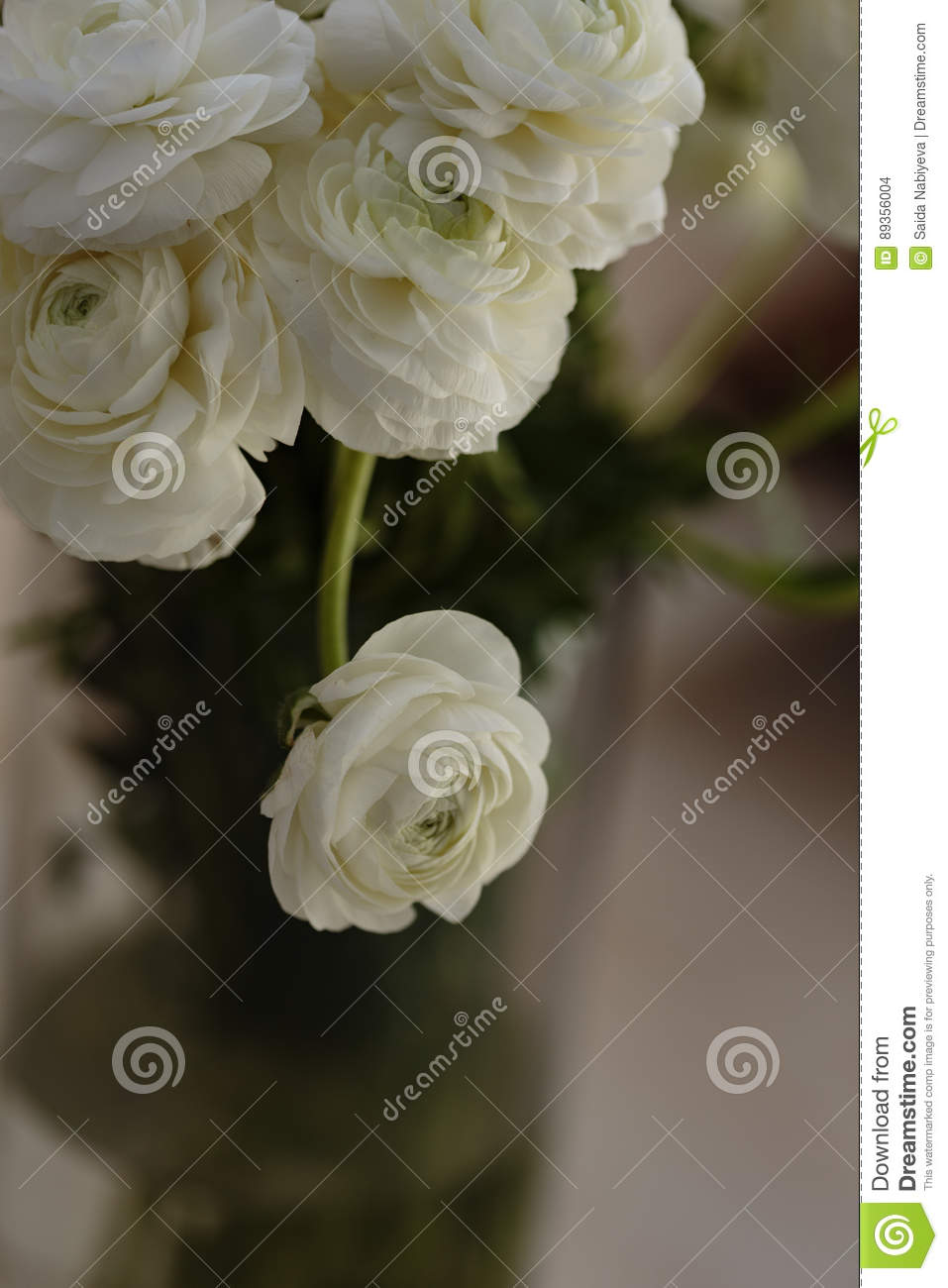 White ranunculus flower in glass vase stock photo image of download white ranunculus flower in glass vase stock photo image of beautiful anniversary mightylinksfo