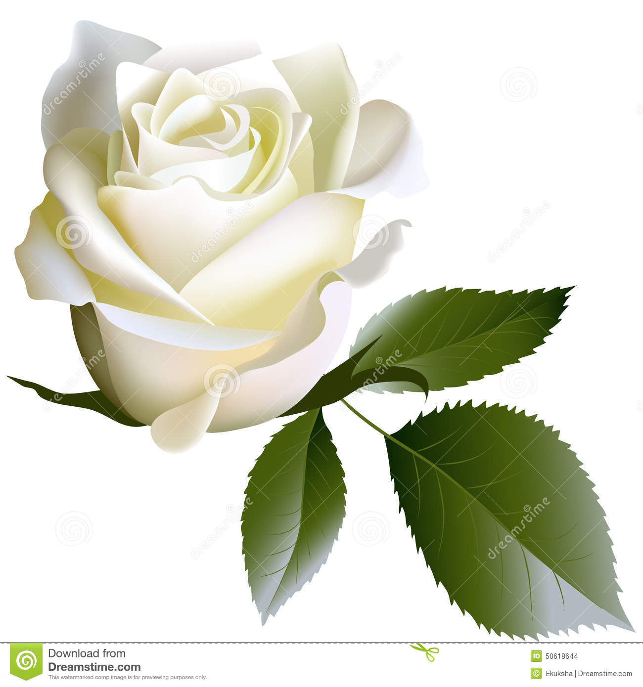 White Realistic Rose Flower And Leaves Stock Vector
