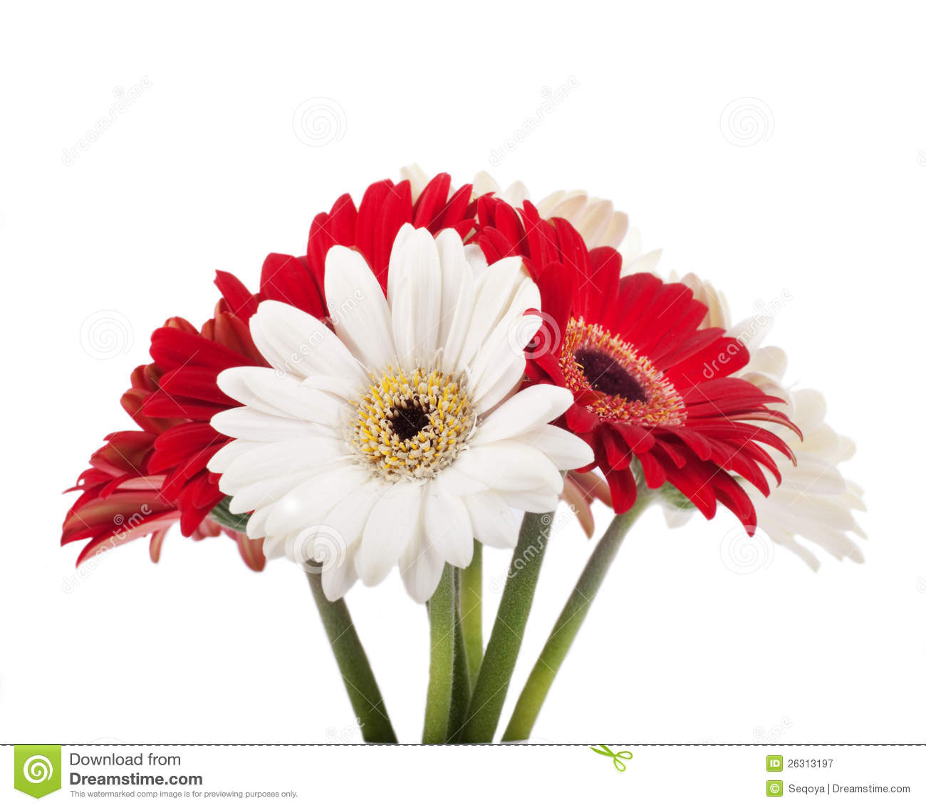 White and red flowers bouquet stock image image of beautiful white and red flowers bouquet mightylinksfo Gallery