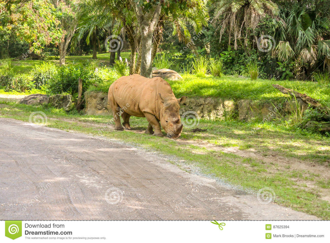 N White Rhino White Rhino Eating Alo...