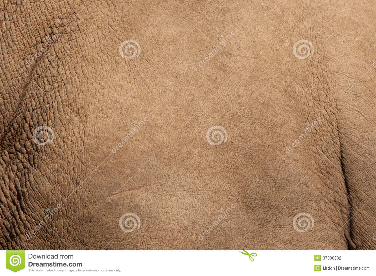 White Rhino Skin Texture Stock Photography - Image: 37380932