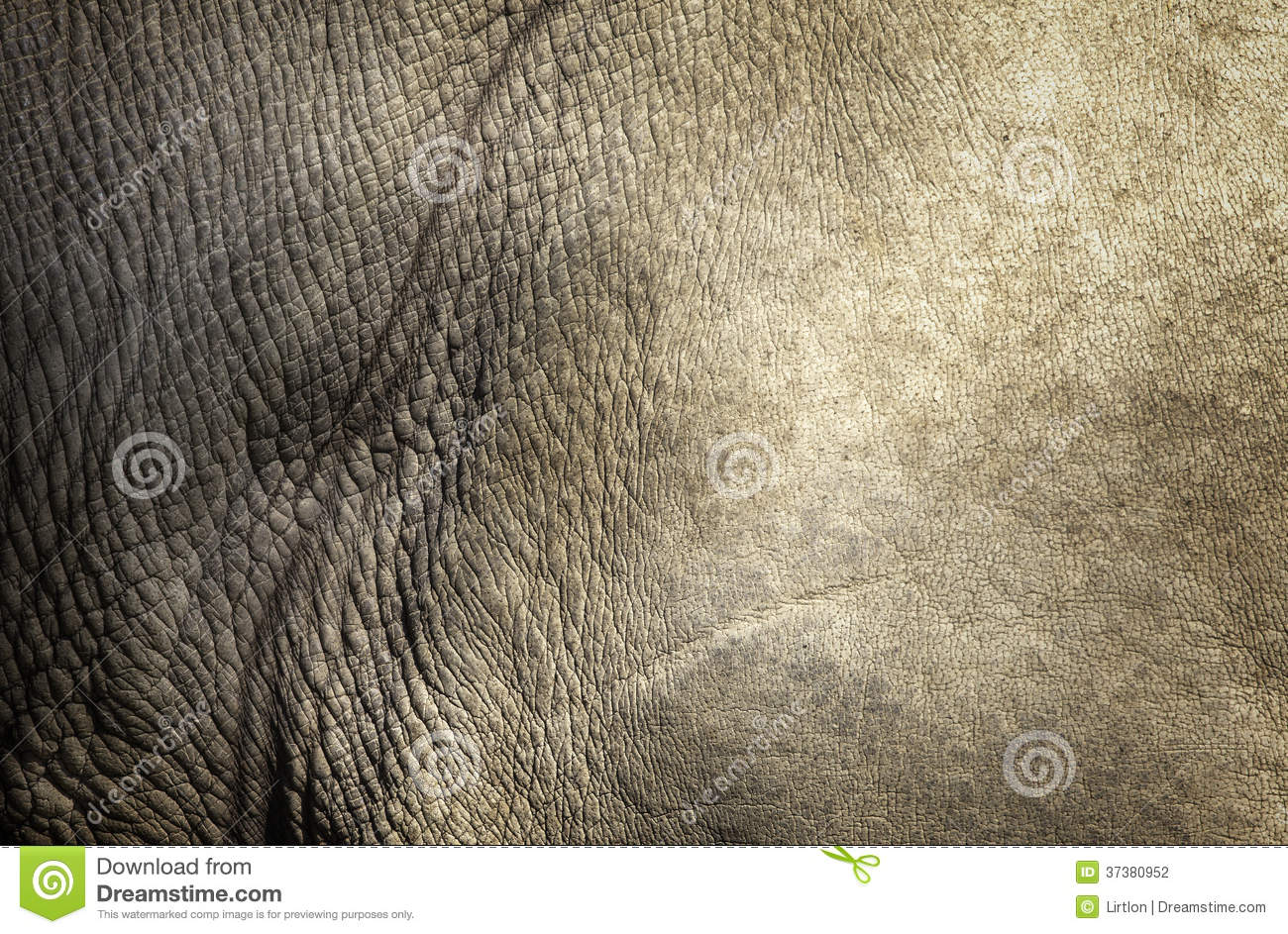 White Rhino Skin Texture Stock Photography - Image: 37380952