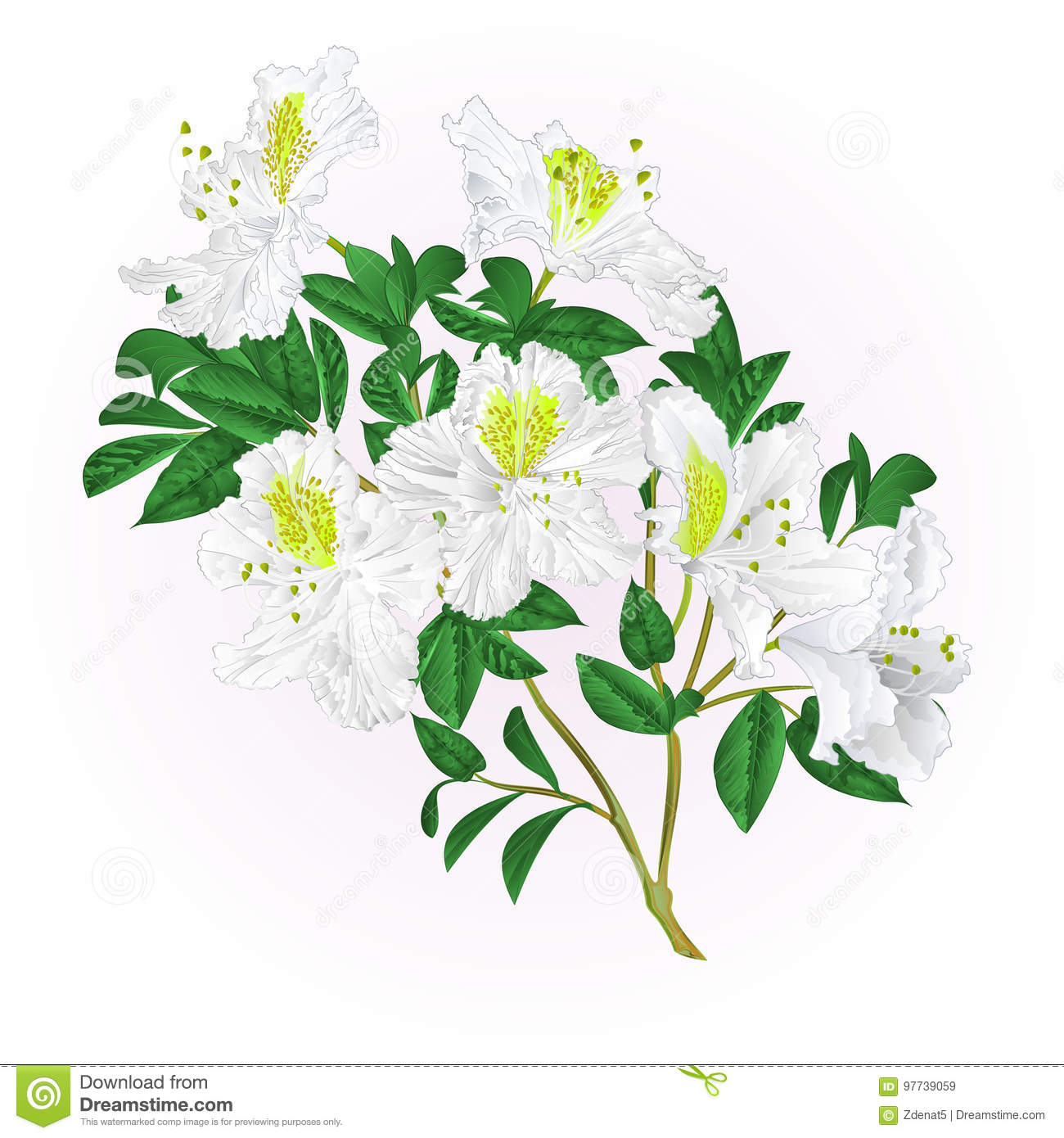White rhododendron twig with flowers and leaves mountain shrub vintage vector editable illustration