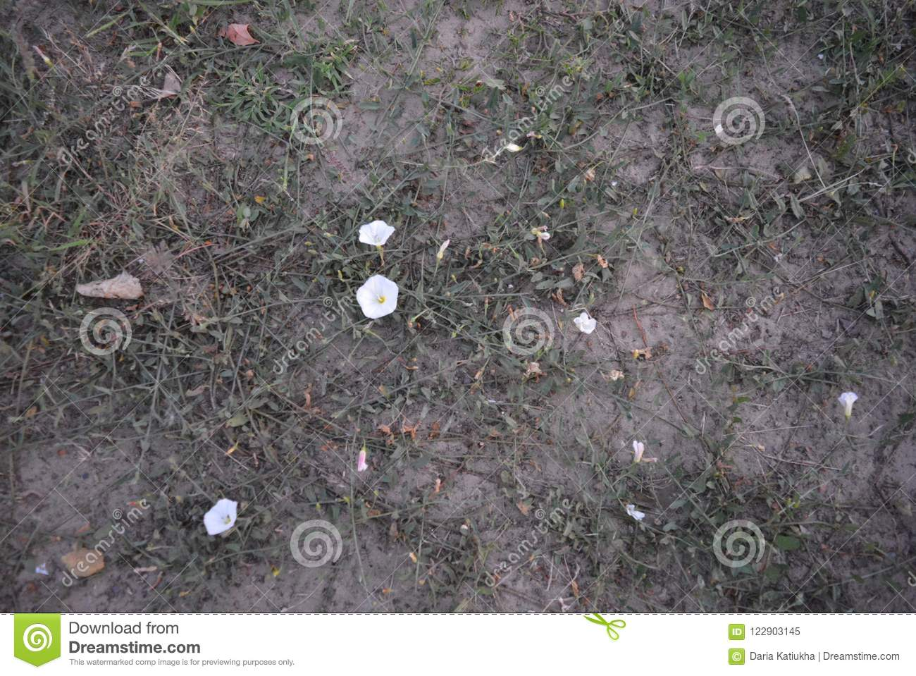 On White River Sand With Spreading Grass And White Flowers In The