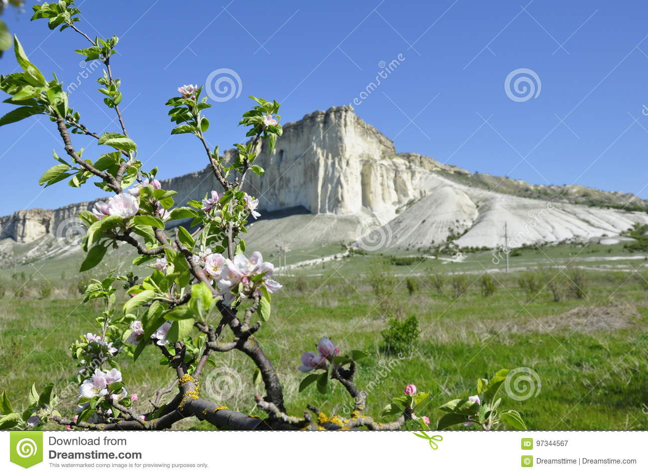 White Rock In Crimea Blooming Flowers Stock Image Image Of Nature