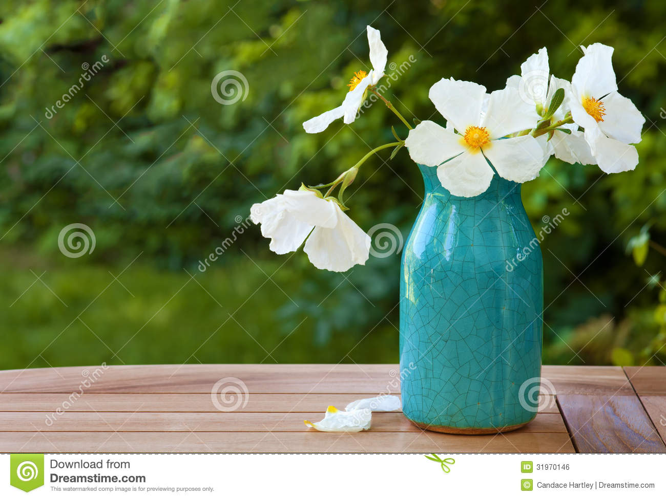 White Rock Rose Blossoms In A Blue Crazed Vase On Wooden Table Stock
