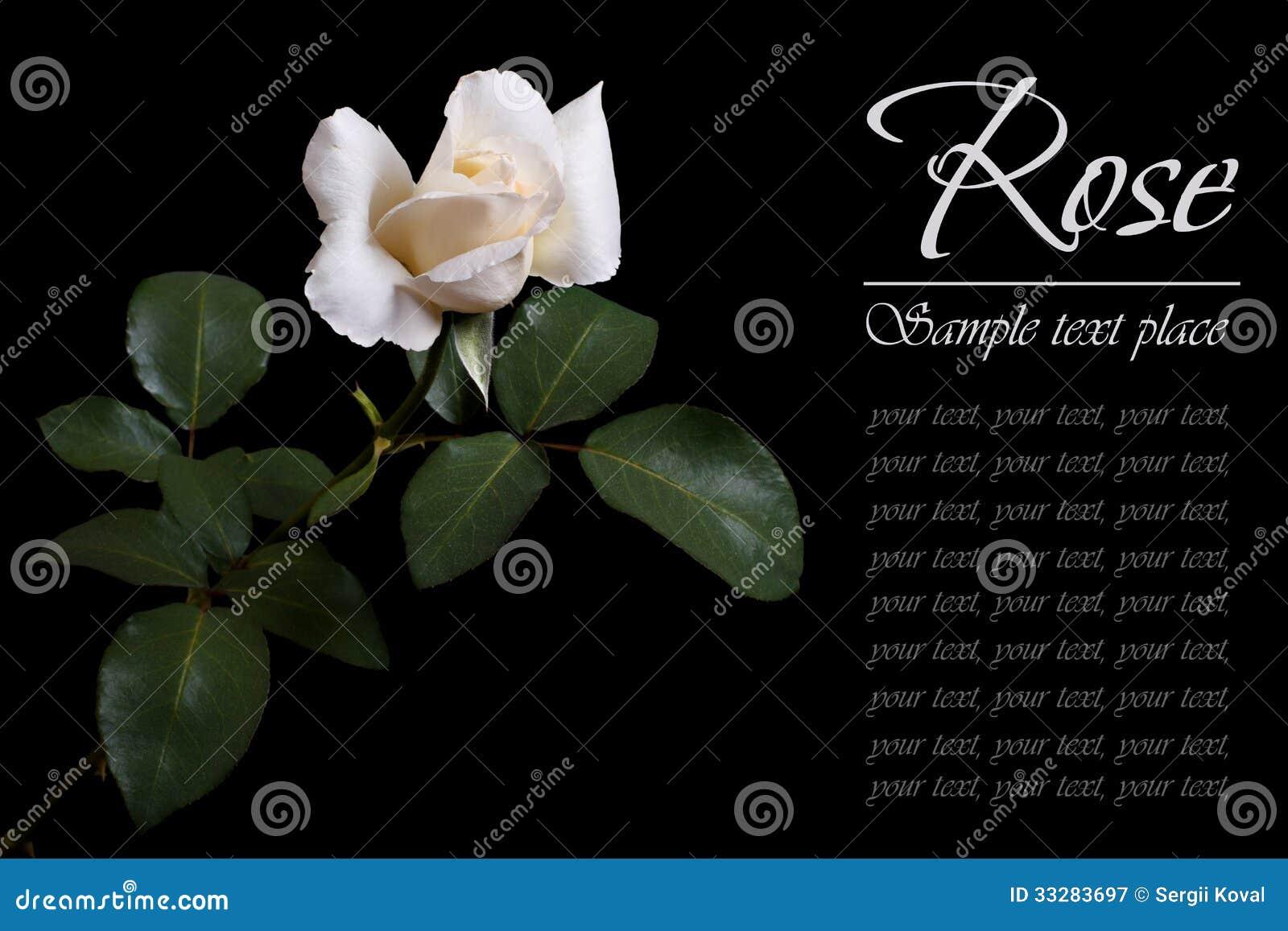 Eleletsitz single white rose meaning images single white rose meaning biocorpaavc Choice Image