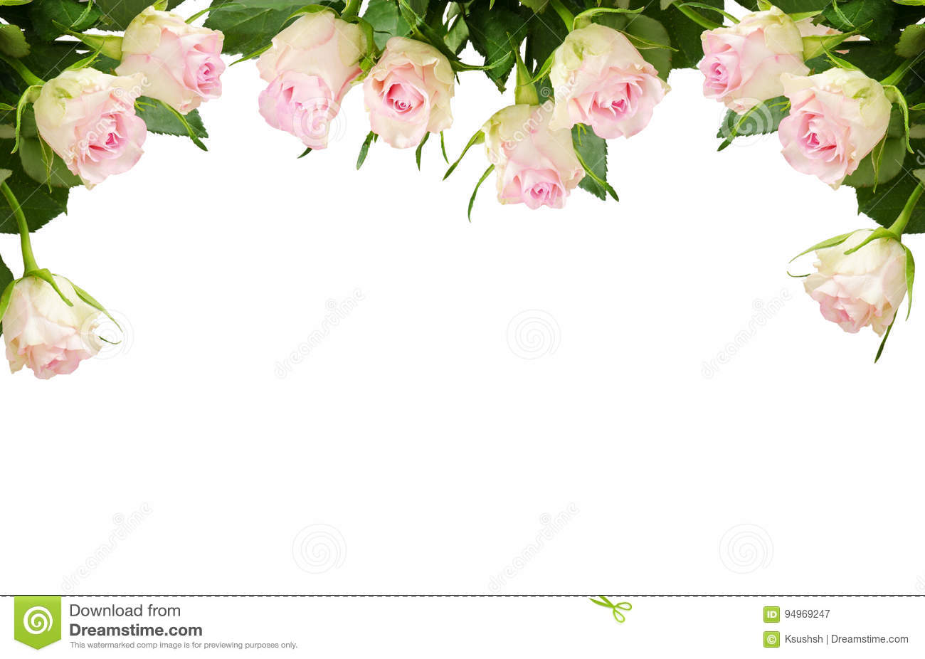 white rose flowers border stock image image of