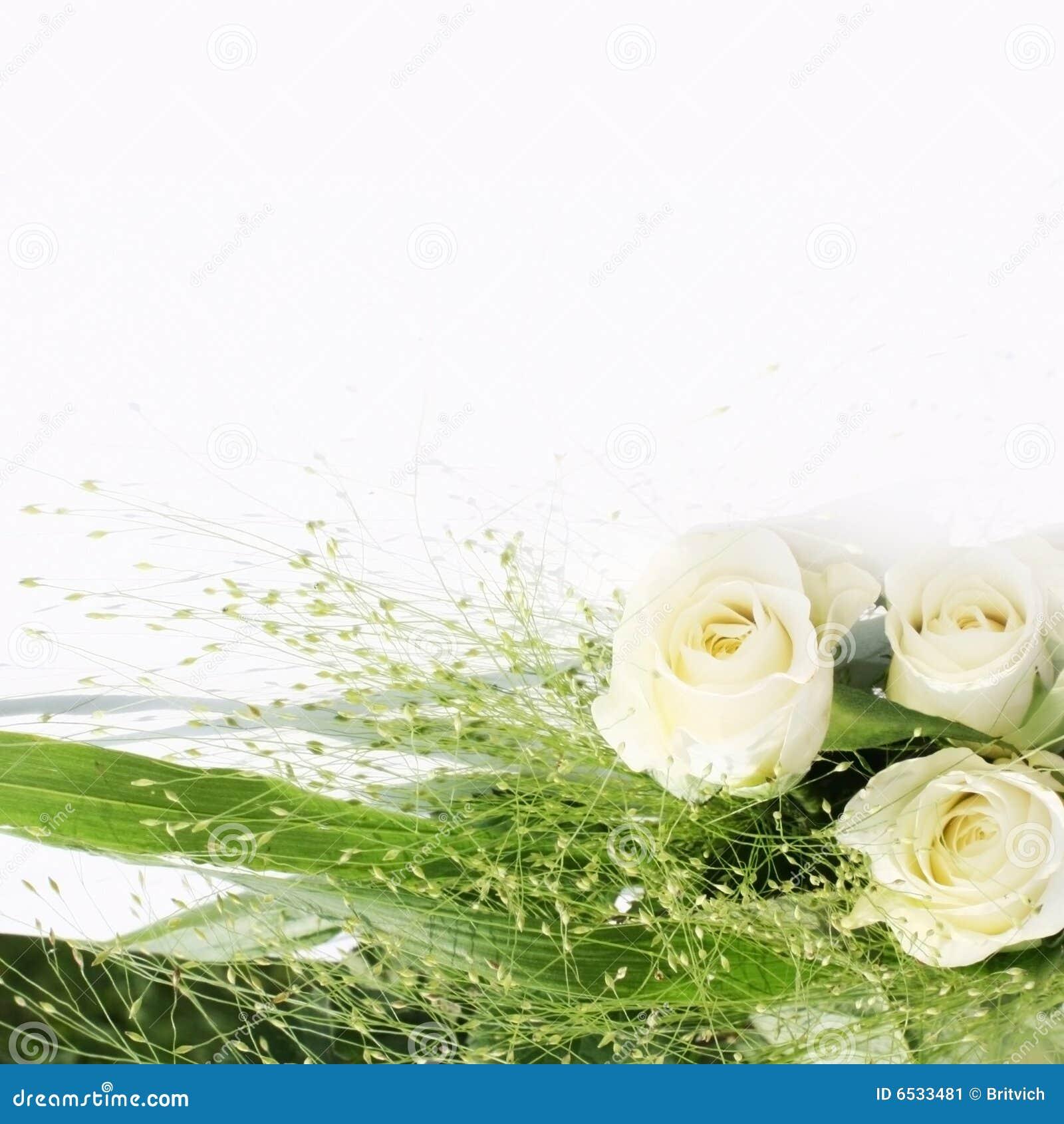 White rose frame stock image. Image of background, accuracy - 6533481