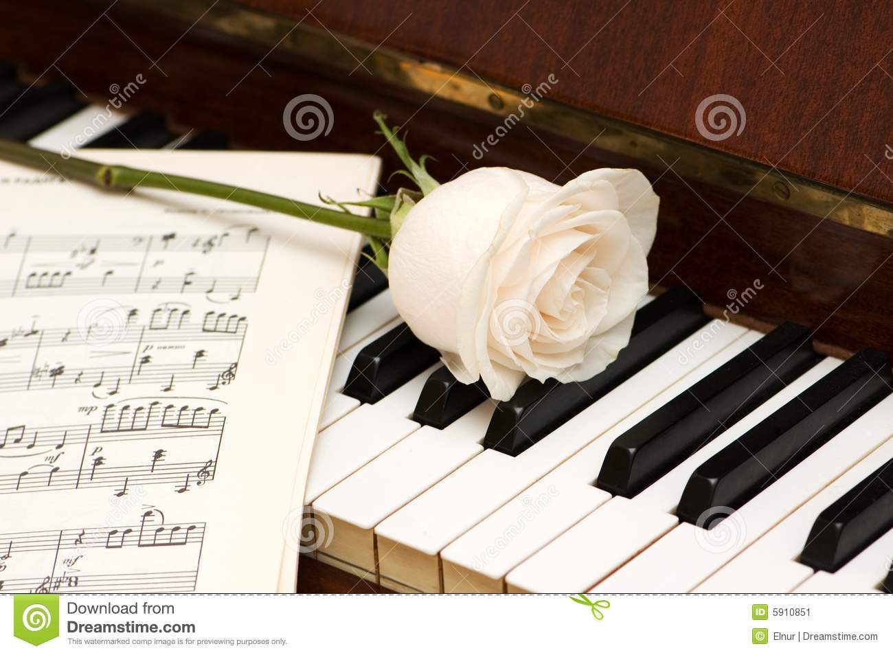 Rose Piano Wallpaper 52999