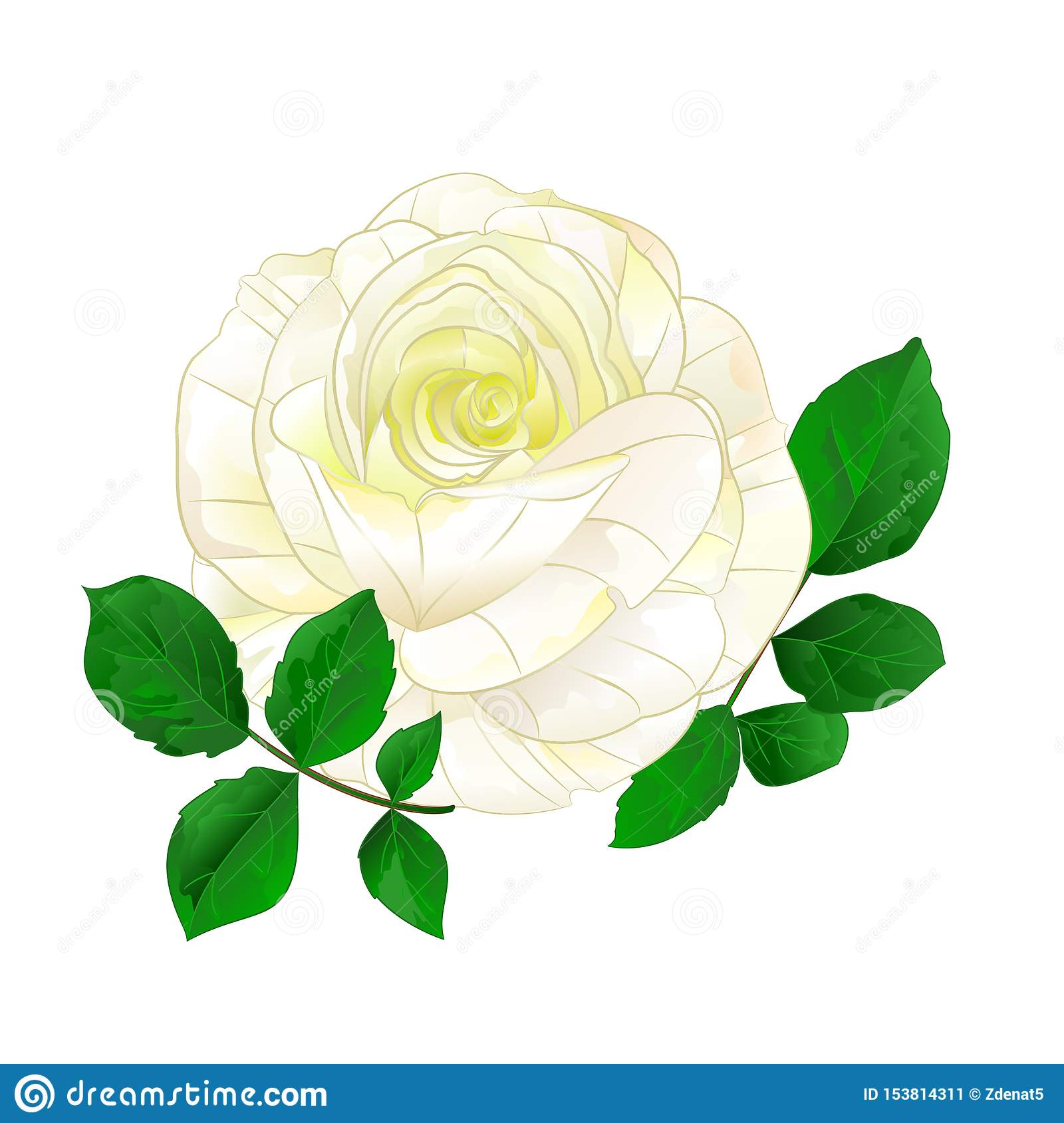 White Rose Simple Stem With Leaves Vintage On A White Background Vintage Vector Illustration Stock Vector Illustration Of Isolated Heart 153814311