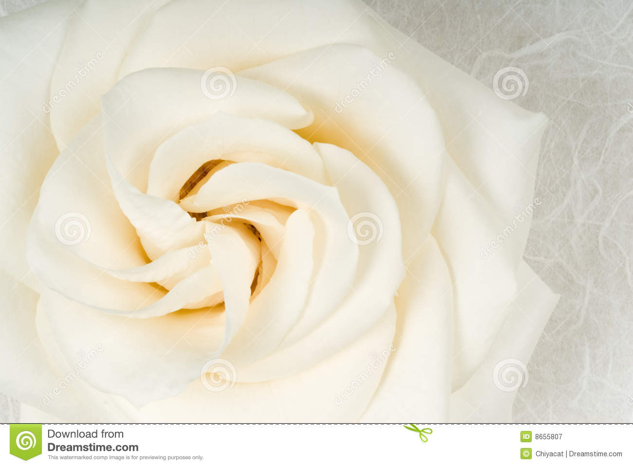 white rose society essay This list of important quotations from a rose for emily by william faulkner will help you work with the essay topics and thesis statements above by allowing you to support your claims.