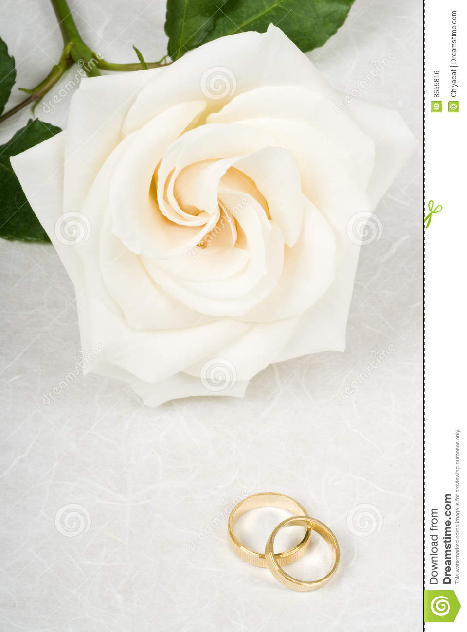 White Rose And Wedding Rings On Textured Paper