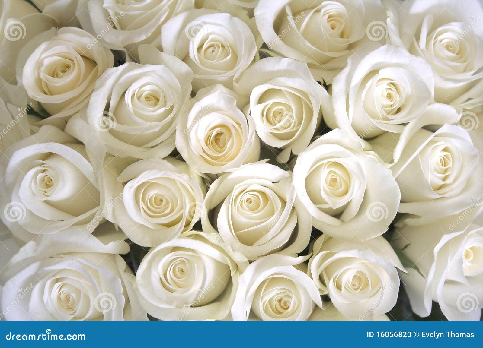 White Roses Background Stock Photo - Image: 16056820
