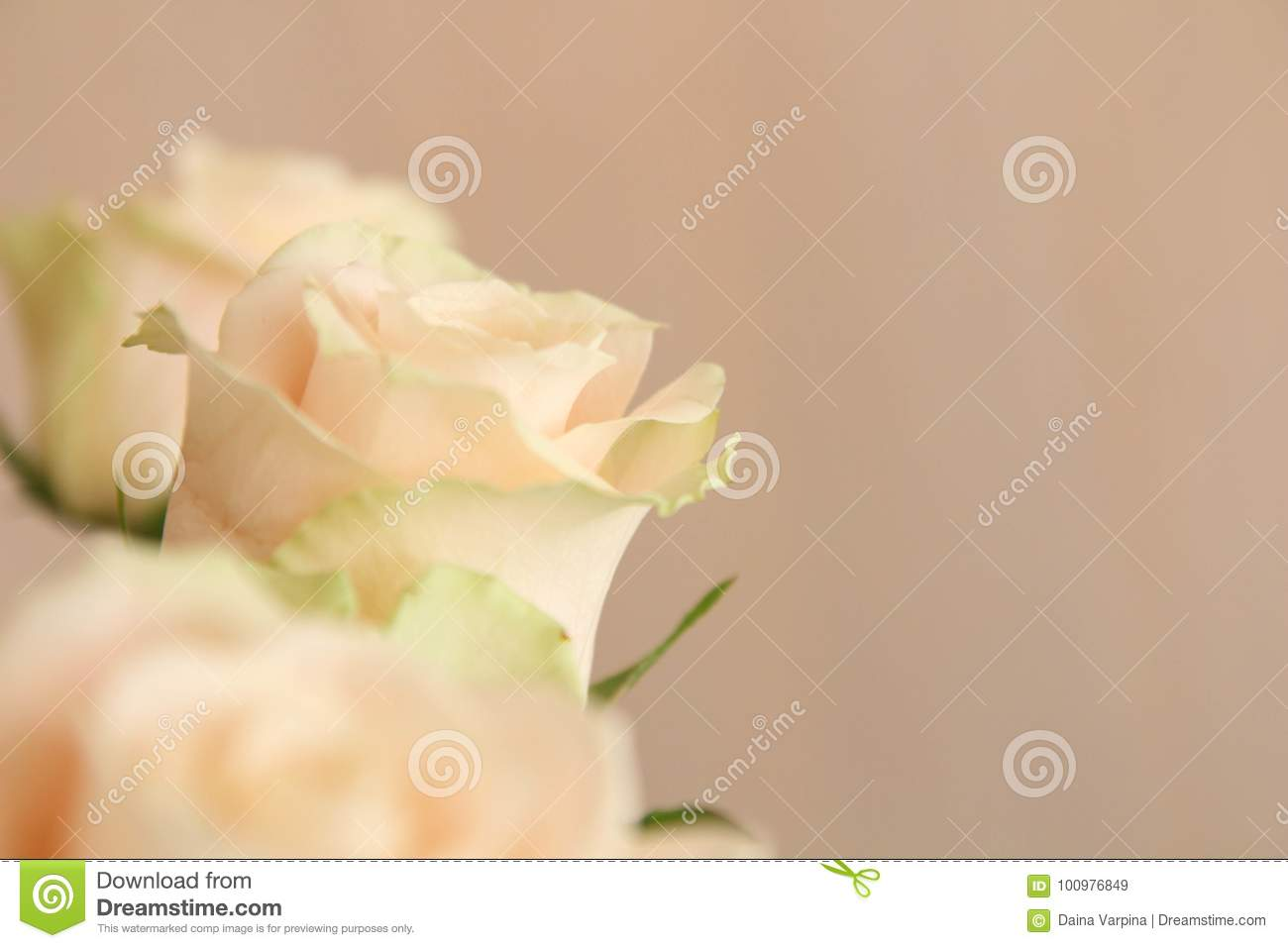 White roses background nature flowers bouquet stock image image download comp izmirmasajfo